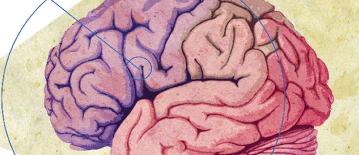 cerebro-4
